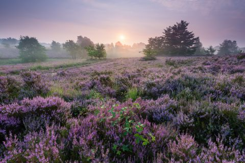 Heathland at sunrise