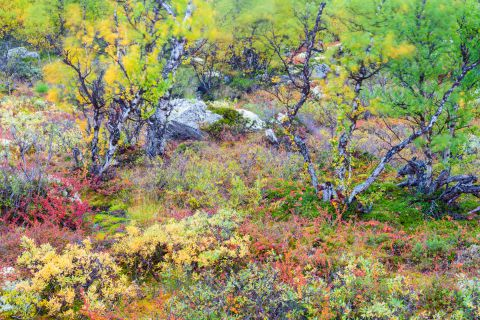 Abstract autumn landscape in Norway
